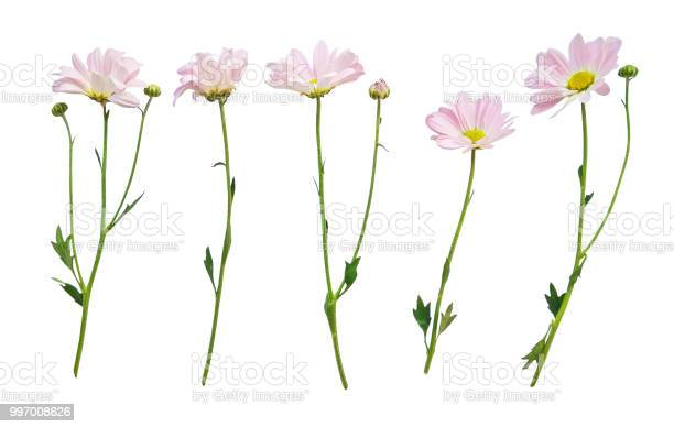 Flowers with stems isolated on white picture id997008626?b=1&k=6&m=997008626&s=612x612&h=dqlrtwroqk q7m4rhibrfvji9oxnep1r3n8qgpdzynk=