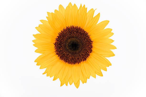 Blumen XXXL – Foto