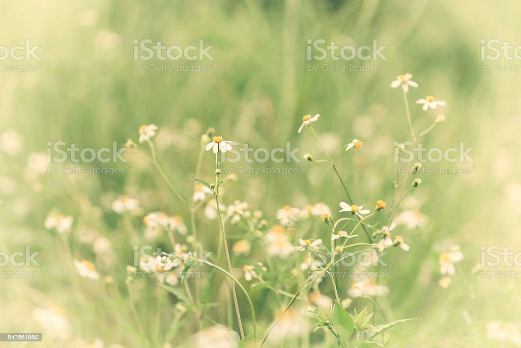 flowers,Thailand stock photo