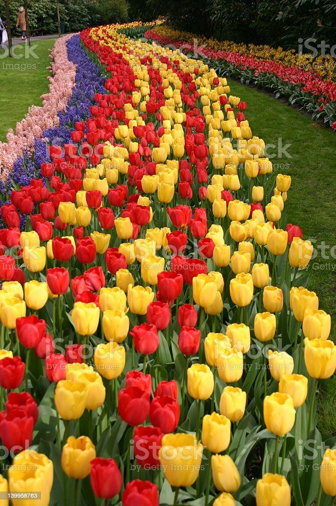 flowerstreet royalty-free stock photo