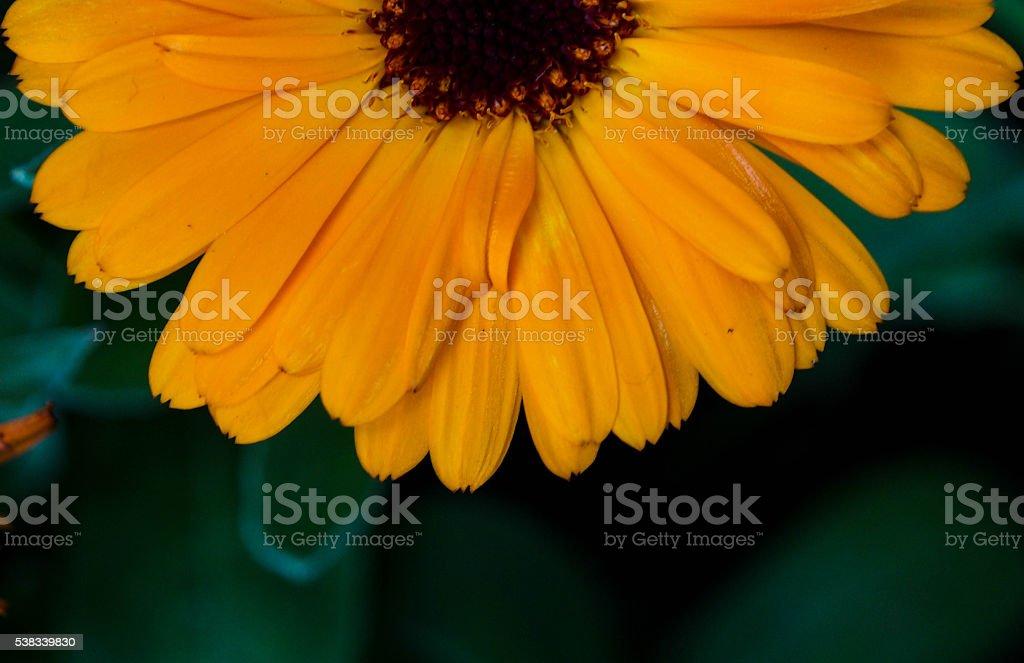 Flower-Wallpaper stock photo