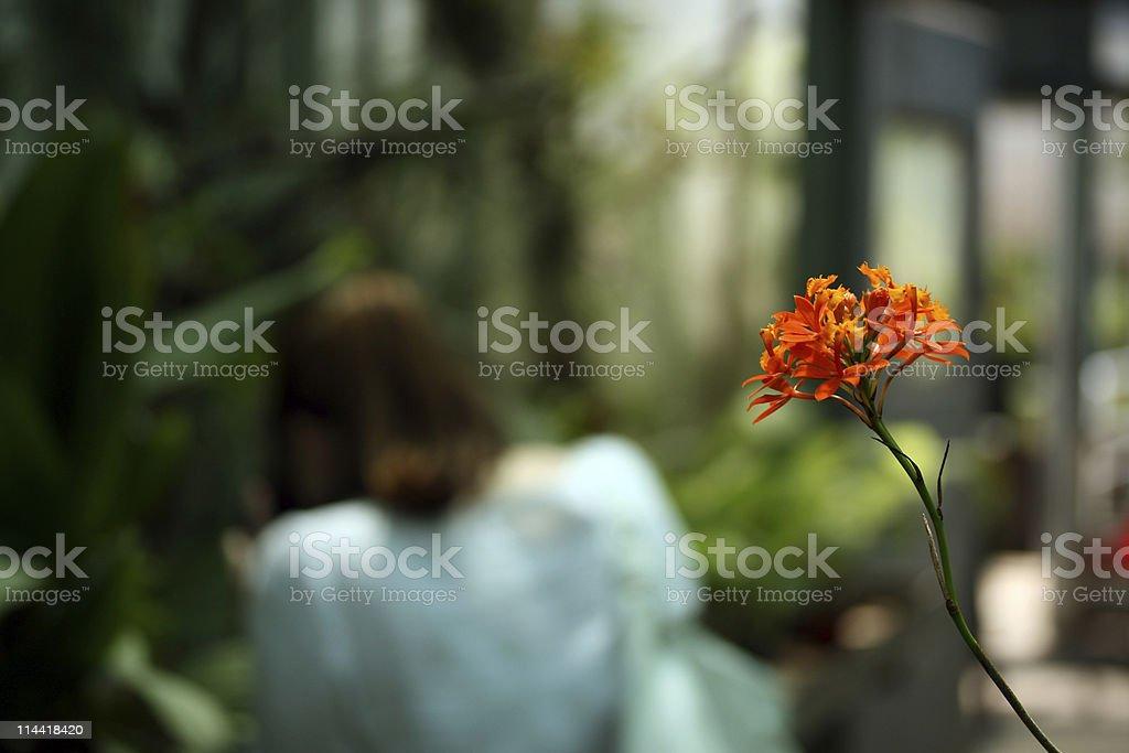Flowery Bokeh stock photo