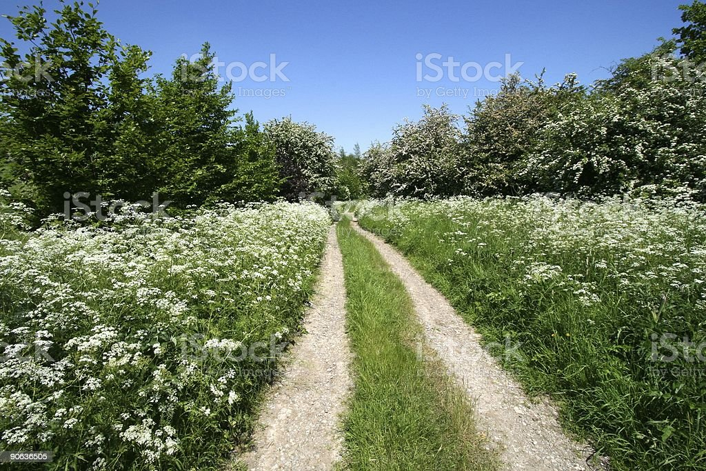 Flowery Country Track royalty-free stock photo
