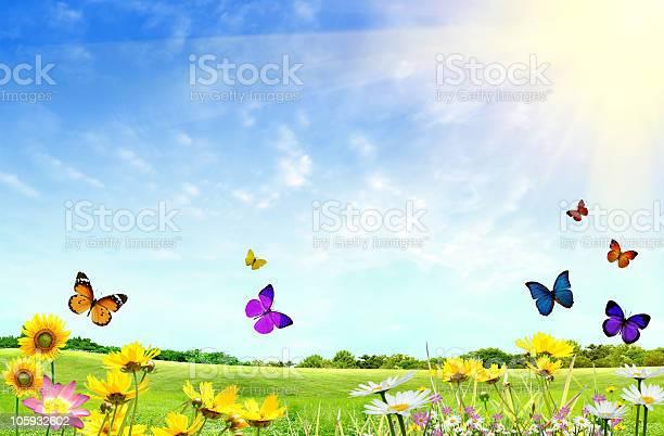 Flowery field picture id105932602?b=1&k=6&m=105932602&s=612x612&h=x  apnpyel9qnpzxd35zgkqriiahwhgnpefgvqrnykc=