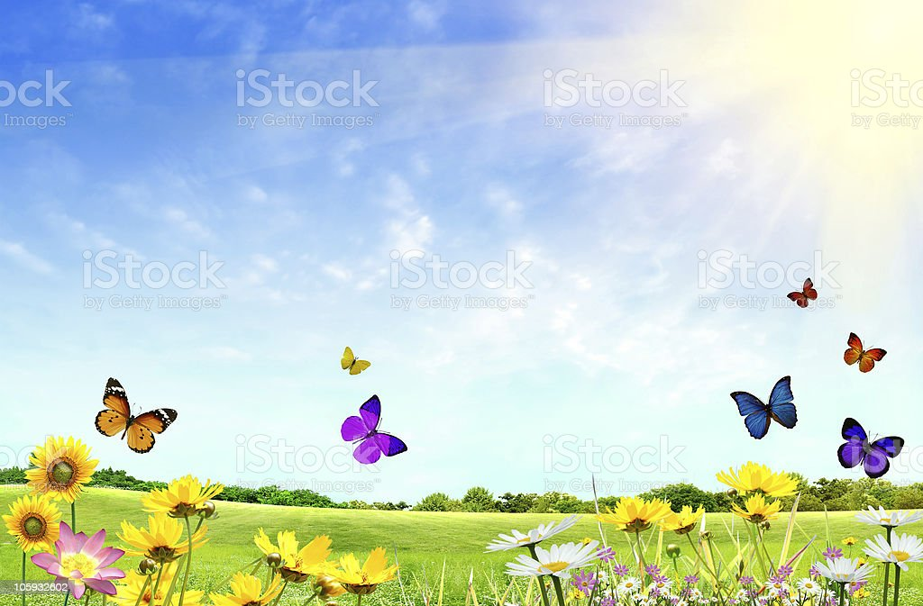 Flowery field stock photo