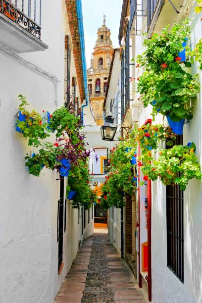 Flowery lane in the Old Town of Cordoba, Spain with cathedral tower Famous flower filled lane in the Old Town of Cordoba, Spain with cathedral tower cordoba mosque stock pictures, royalty-free photos & images