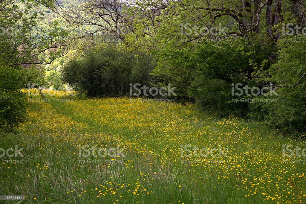 Flowery meadow bordered by bushes stock photo