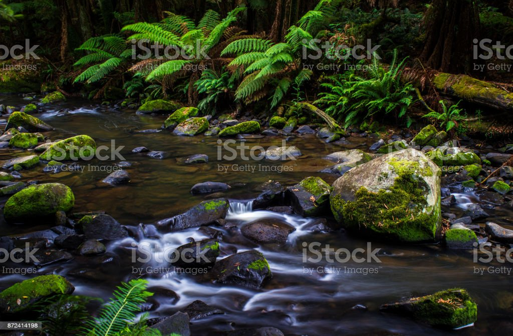 Flowing creek in a rainforest. Lush ferns and large boulders. Horizontal format landscape. stock photo