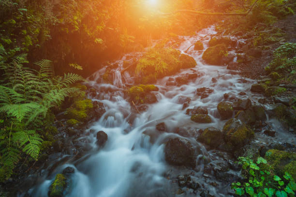Flowing creek through magical lush forest in Oregon stock photo