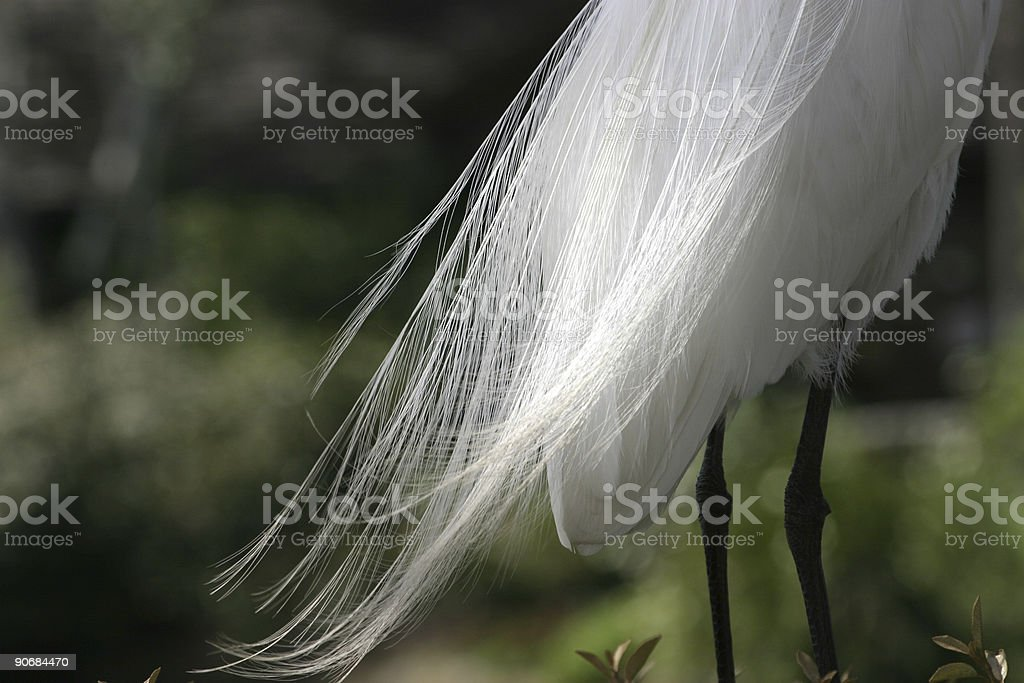 Flowing Feathers royalty-free stock photo