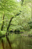 Flowing river in the forest. Huelgoat Brittany France