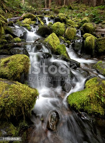 Stream flowing beneath Sitka spruce and Douglas fir trees covered with moss and ferns