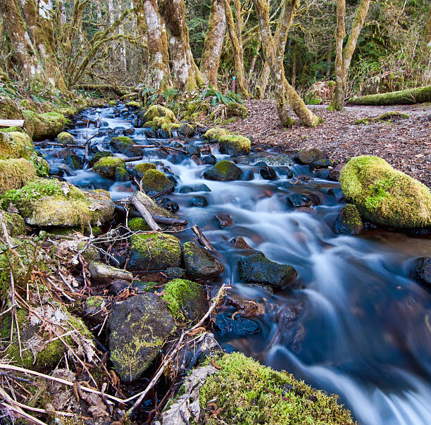Flowing Stream With Mossy Rocks stock photo