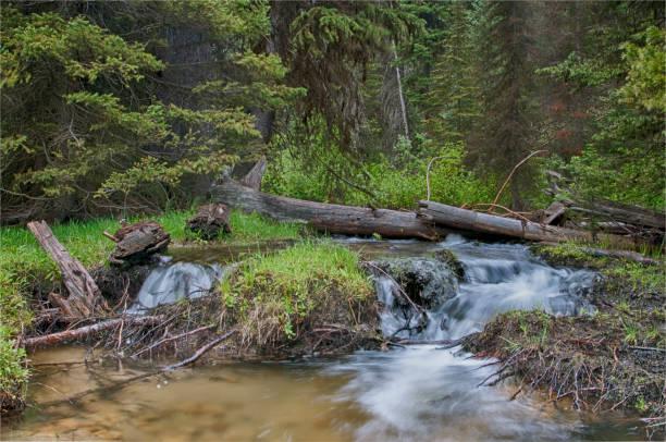 Stromend water in het bos foto