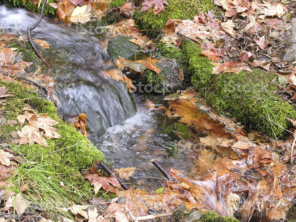 Flowing Water with Fall Leafs royalty-free stock photo