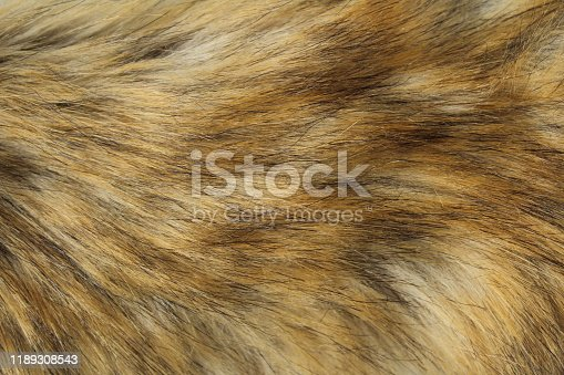 istock Fluff texture fox-color background warm 1189308543