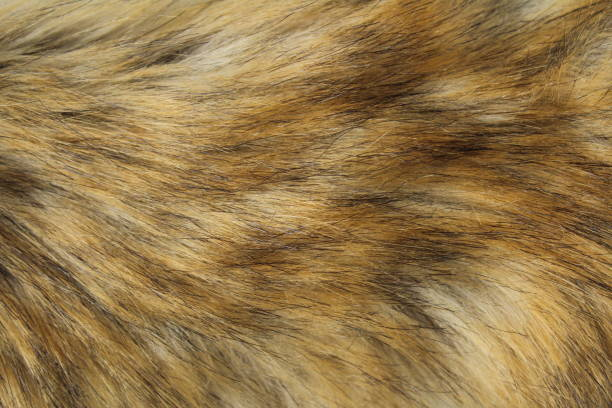 Fluff texture fox-color background warm Fluff texture fox-color background warm animal hair stock pictures, royalty-free photos & images