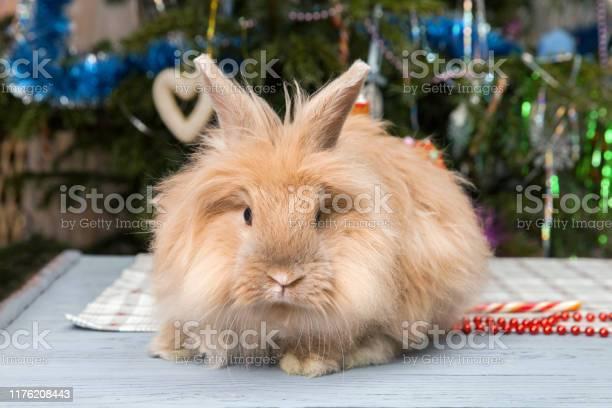 Fluffy angora rabbit picture id1176208443?b=1&k=6&m=1176208443&s=612x612&h=ugszvhnt80ve vh6r5z5ezydekfy1y 1 rp7eqy92hm=
