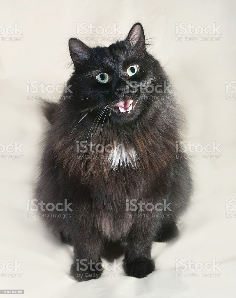 Fluffy Black Cat Sitting On Yellow Stock Photo Download Image Now Istock