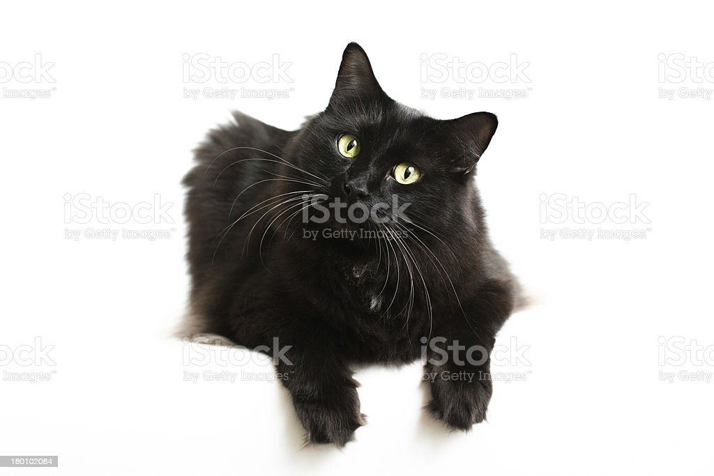 Fluffy Black Cat Sitting stock photo