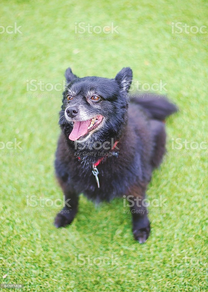 Fluffy Black Dog in Shelter stock photo