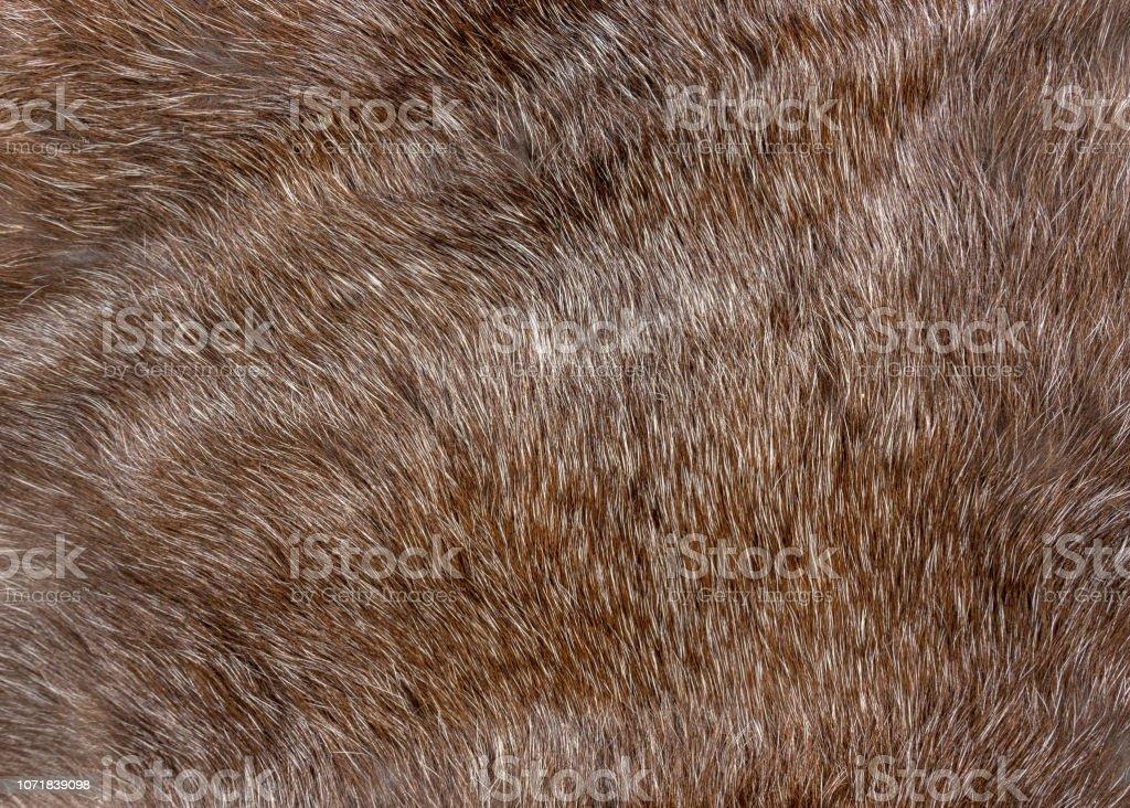 fluffy brown natural animal fur texture background closeup.