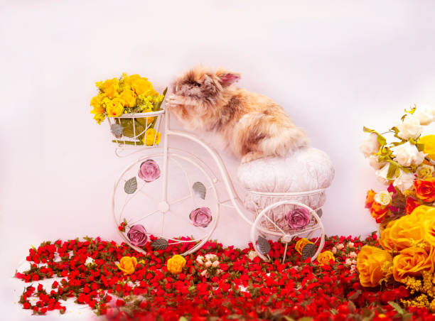 Fluffy Bunny Rabbit Riding Bicycle With Easter Basket Flowers stock photo