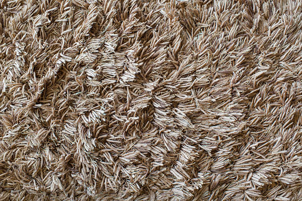 Best Shag Rug Stock Photos Pictures Amp Royalty Free Images