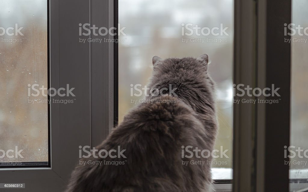 Fluffy cat looking out the window to the city 2 stock photo