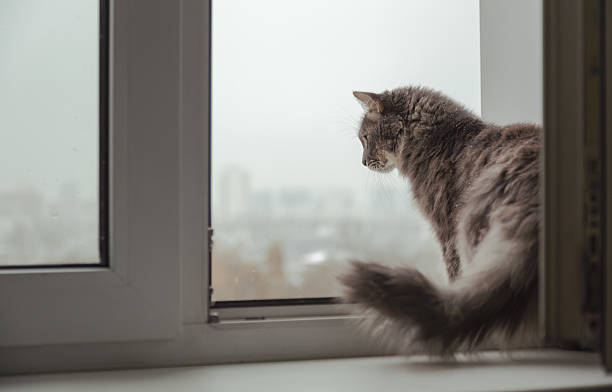 Fluffy cat looking out the window to the city stock photo