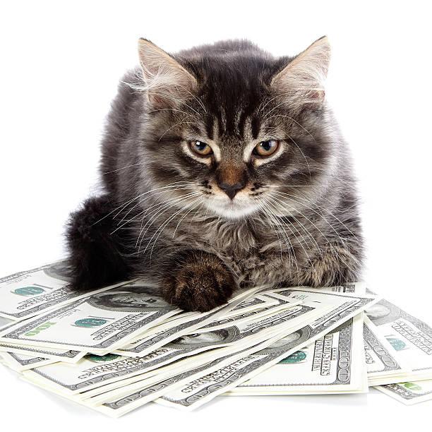 Fluffy cat with brown eyes picture id529968315?b=1&k=6&m=529968315&s=612x612&w=0&h=bhsbzacr0ophc4esjkbbm 253 kkkox ypa1hpj6cik=