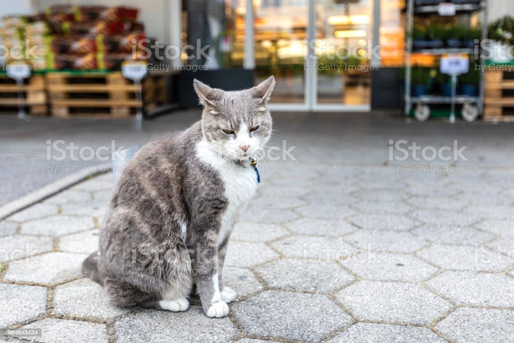 A fluffy cat with collar sits on the street royalty-free stock photo