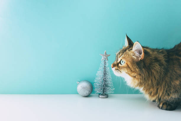 Fluffy cute and funny cat sits near silver fir tree near the ball on picture id1185428811?b=1&k=6&m=1185428811&s=612x612&w=0&h=3k1mbavj0fw2stwn6ude43xcxeom0akgijzv7ksz294=