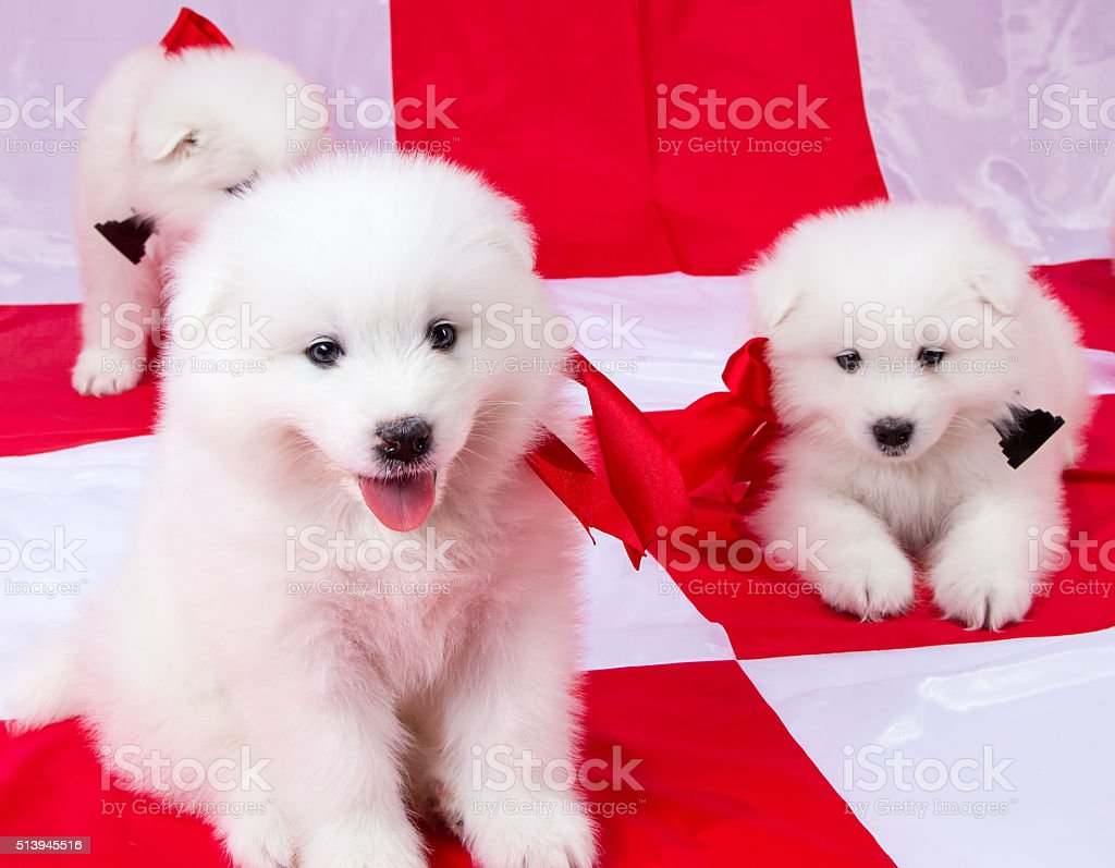 Fluffy Cute Puppies With Red Ribbons Stock Photo Download Image Now Istock