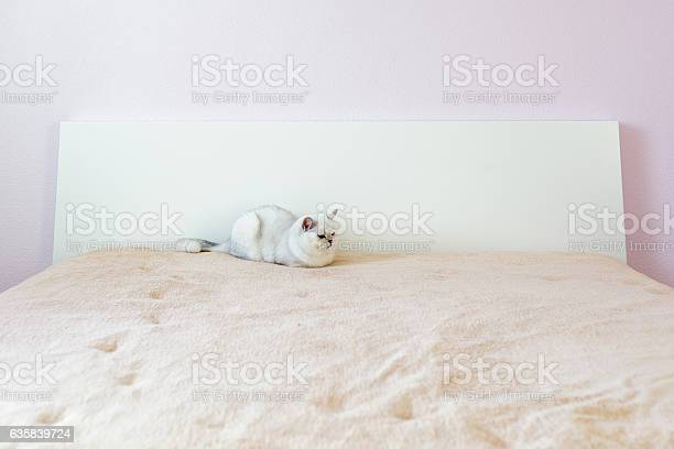 Fluffy domestic cat sitting in bedroom picture id635839724?b=1&k=6&m=635839724&s=612x612&h=jjtfke08lzuxl fs7juv3miwysn84nqyeuwwavjbavm=