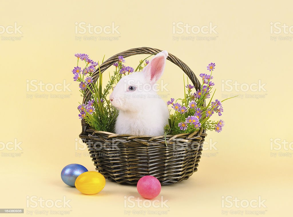 Fluffy  Easter bunny in a basket with flowers royalty-free stock photo