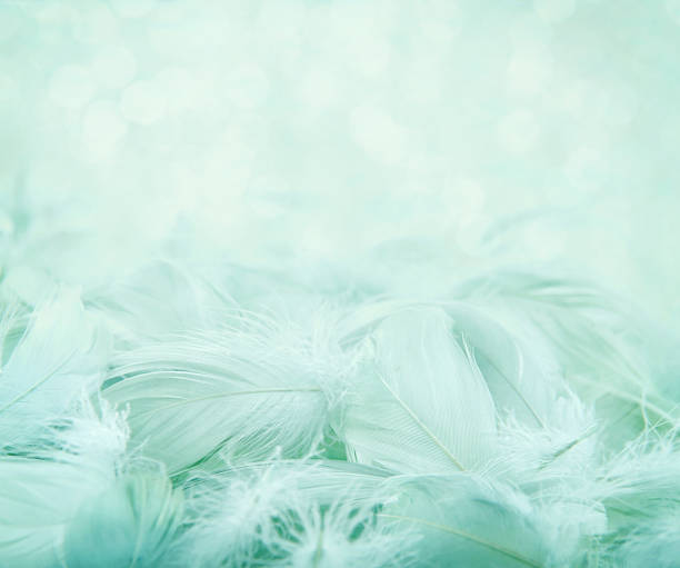 Fluffy feathers on turquoise blurry background stock photo