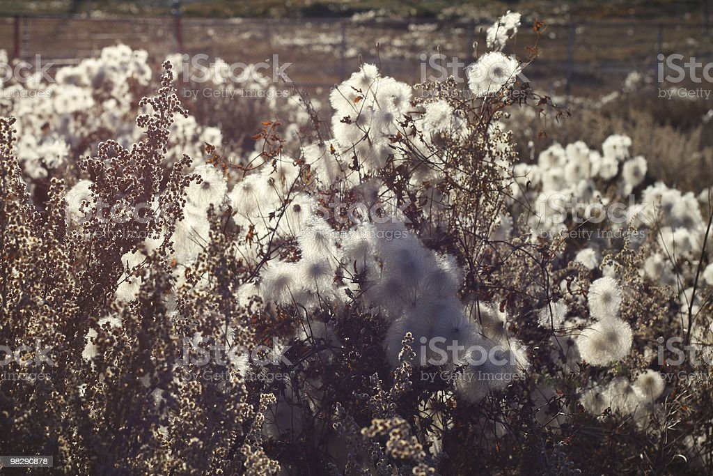 Fluffy Flowers by the Railway Tracks royalty-free stock photo