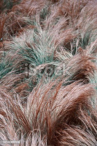 Duo toned fluffy grass background