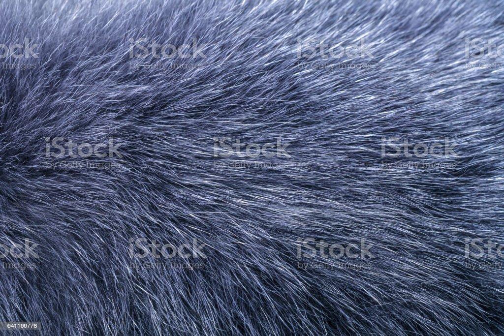 Fluffy gray fur texture stock photo
