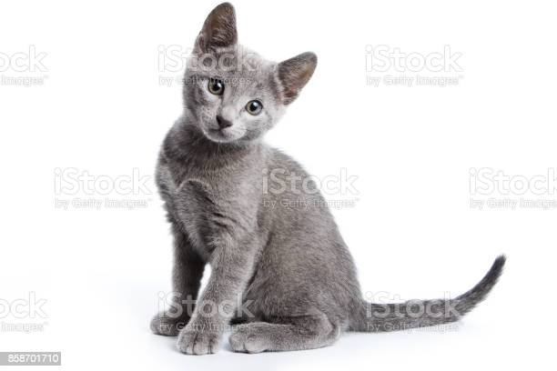 Fluffy gray kitten of a russian blue cat picture id858701710?b=1&k=6&m=858701710&s=612x612&h=mlui chjhausyklz  9c47eac0wipi2uaigi8q2h  m=