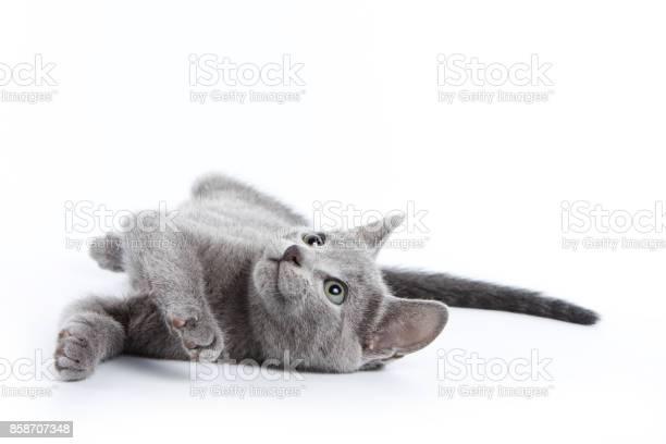 Fluffy gray kitten of a russian blue cat picture id858707348?b=1&k=6&m=858707348&s=612x612&h= kx1cyxegj4g5vwwyalpn3iact4vt0dujuk3irg1t5y=