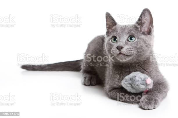 Fluffy gray kitten of a russian blue cat picture id858715176?b=1&k=6&m=858715176&s=612x612&h=vy9t zg2kj0c55o8 o7zzcldkcqcypbeah47gzqcapk=