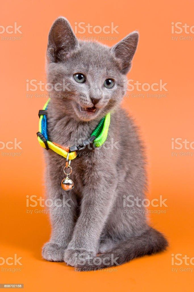 子猫 首輪