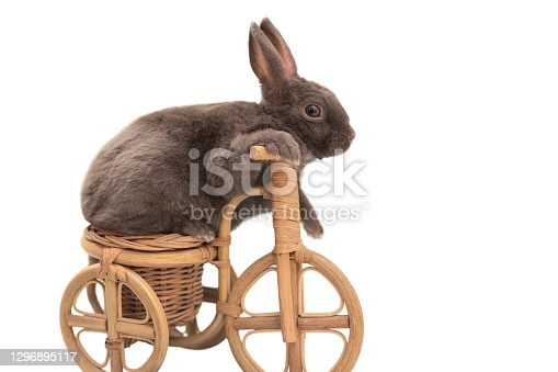 istock fluffy gray pet rabbit sitting on a toy bike, isolated on a white background 1296895117