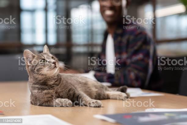 Fluffy grey cat laying on the computer table picture id1134074092?b=1&k=6&m=1134074092&s=612x612&h=p4ybywqia5uoffznzwe0gsvsy r2ghgyhbgzesanmrc=