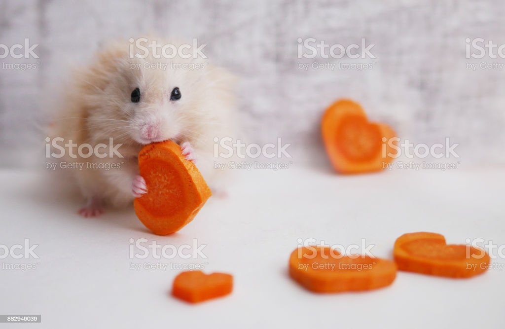 A Fluffy Hamster Is Eating A Cut Of Carrots On A White