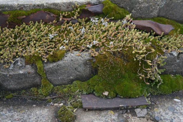 Fluffy moss on a stone wall stock photo