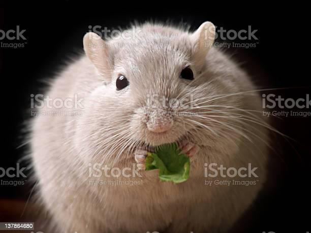Fluffy mouse ball picture id137864680?b=1&k=6&m=137864680&s=612x612&h=f88dkxm0h2xurvhw 4lwvqtlgb0edi2w0aui9lox7ue=