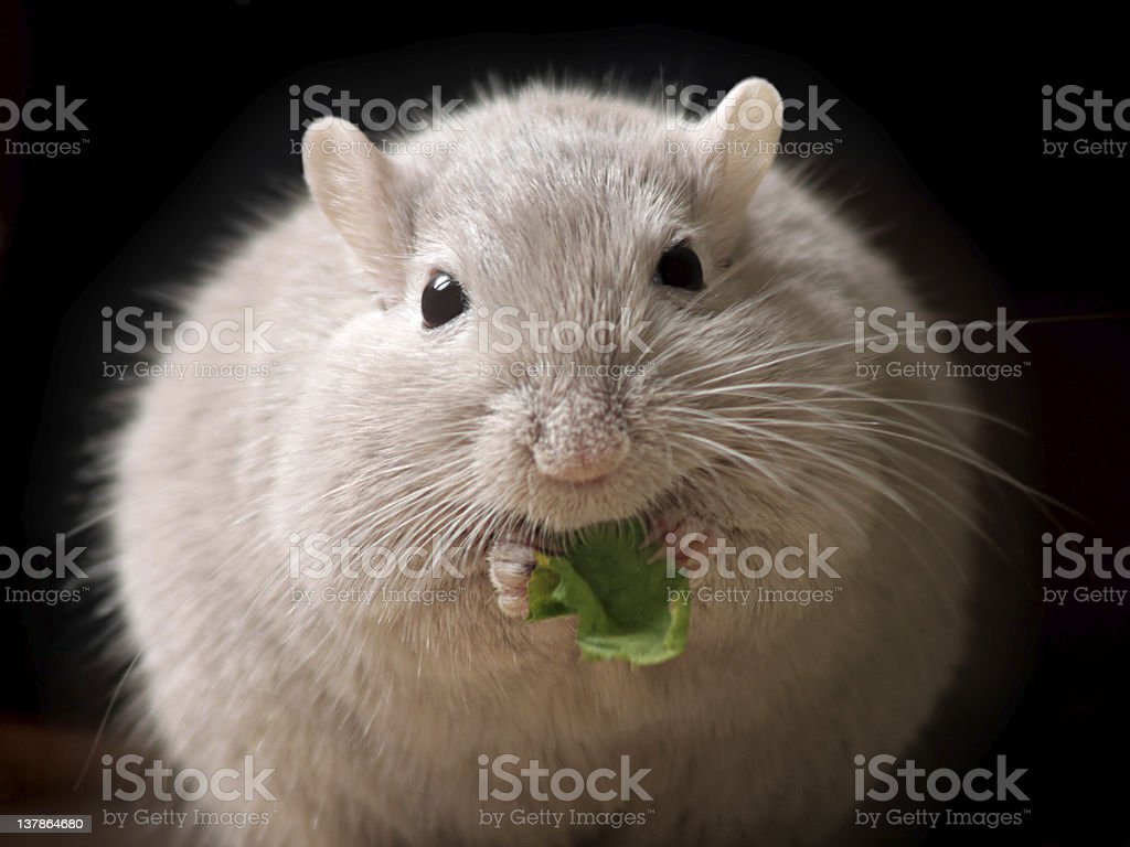 fluffy mouse ball stock photo